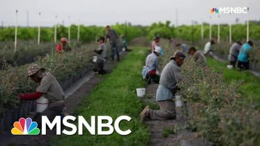 The Real Reason Grocery Shelves Are Empty | All In | MSNBC 10