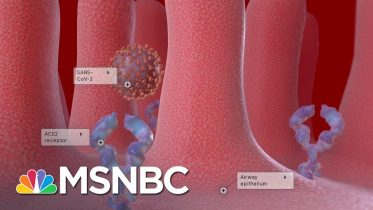 Researchers Hopeful A Coronavirus Vaccine Will Be Available Next Year | The Last Word | MSNBC 10