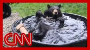 Bear taking a bath will bring a smile to your face 4