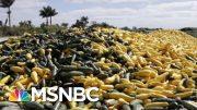 'Massive Failure' Of Leadership In Food Crisis, Says Chef | Morning Joe | MSNBC 4