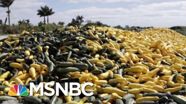 'Massive Failure' Of Leadership In Food Crisis, Says Chef | Morning Joe | MSNBC 1