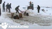 Farmers rescue eleven frantic horses from icy water | Animalkind 5