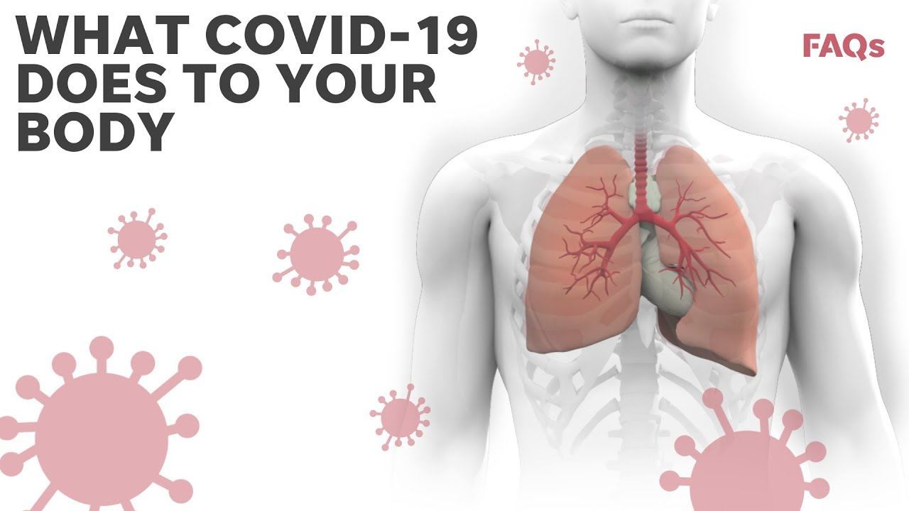 Here's how coronavirus attacks the body   Just the FAQs: Deep Dive 1