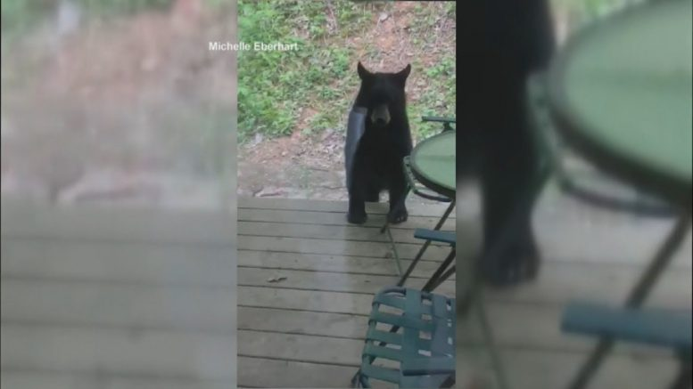 Black bear wanders into Tennessee cabin with guests inside 1