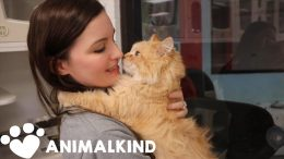 This is how homeless pets are being cared for amid pandemic | Animalkind 6