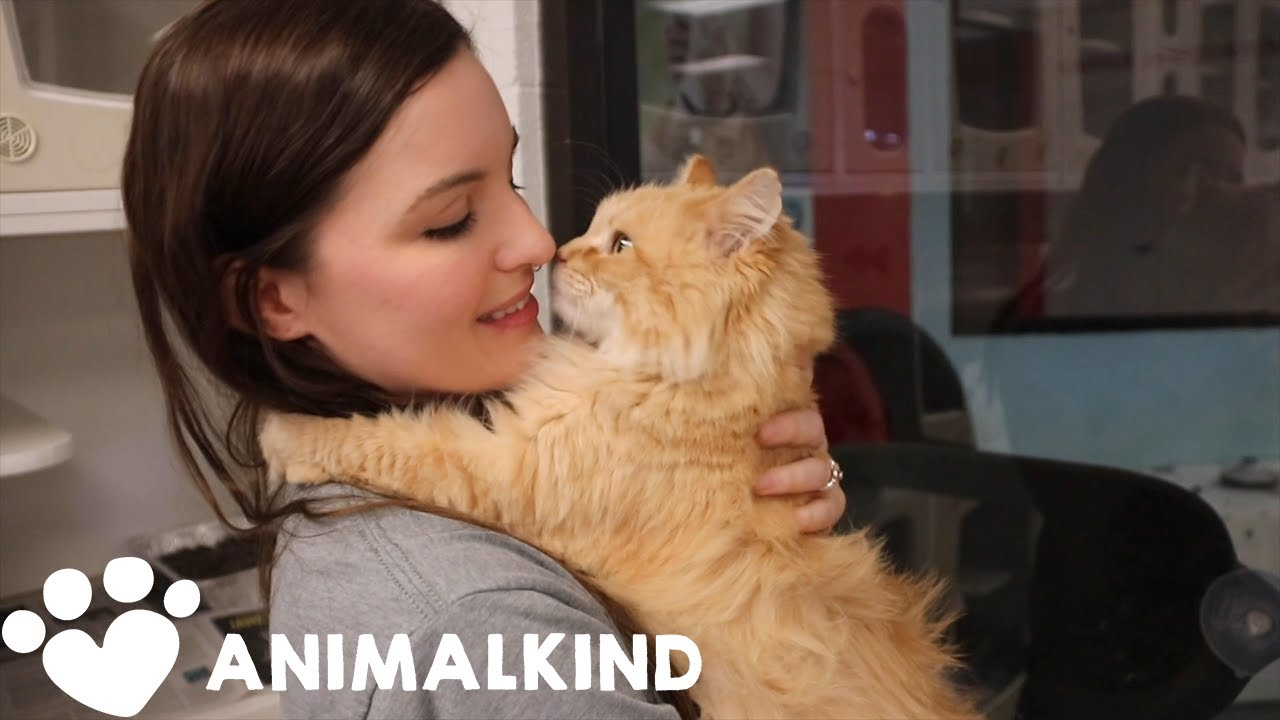 This is how homeless pets are being cared for amid pandemic   Animalkind 9
