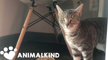 Fostering shelter animals during isolation: A win-win | Animalkind 5