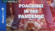 Poaching In The Pandemic: More animals being killed around the globe 3