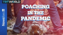 Poaching In The Pandemic: More animals being killed around the globe 8