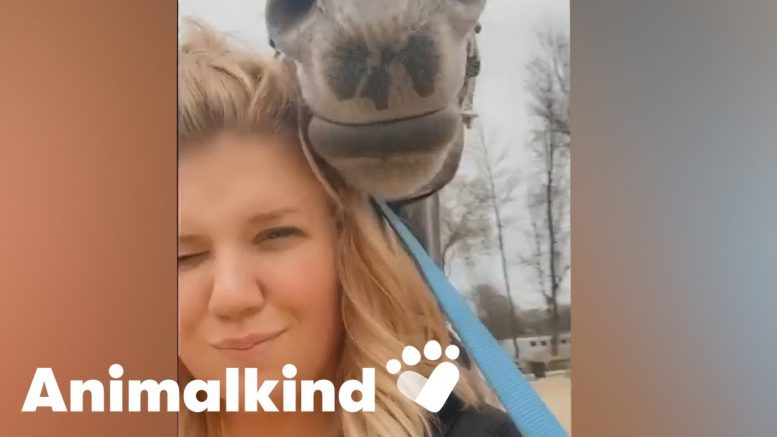 Hairstylist stunned to see her horse show up at work | Animalkind 1