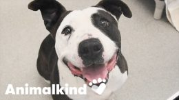 Dogs spared from euthanasia in the nick of time   Animalkind 3