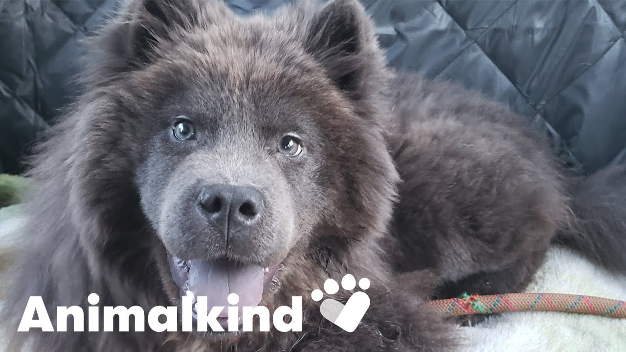 Puppy given second chance after trauma | Animalkind 5