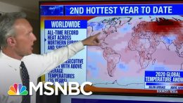 First Half Of 2020 Already Second-Warmest Year On Record | MSNBC 2