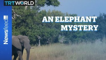 The curious case of the dying pachyderms 6