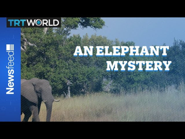 The curious case of the dying pachyderms 3