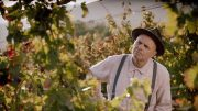 Movie reviews: 'From The Vine' formulaic, but a fun ride 3