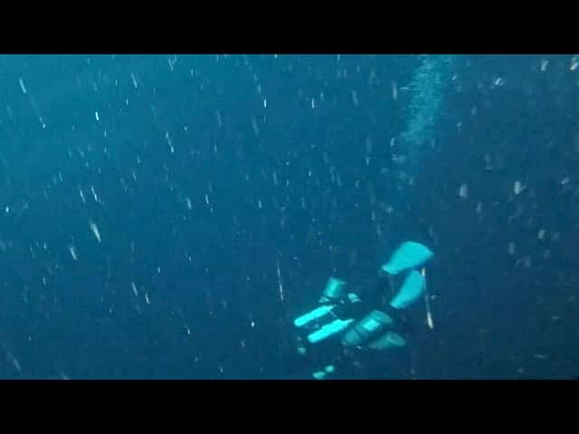 Divers explored a 'blue hole' in the Gulf of Mexico and here's what they found at the bottom 7