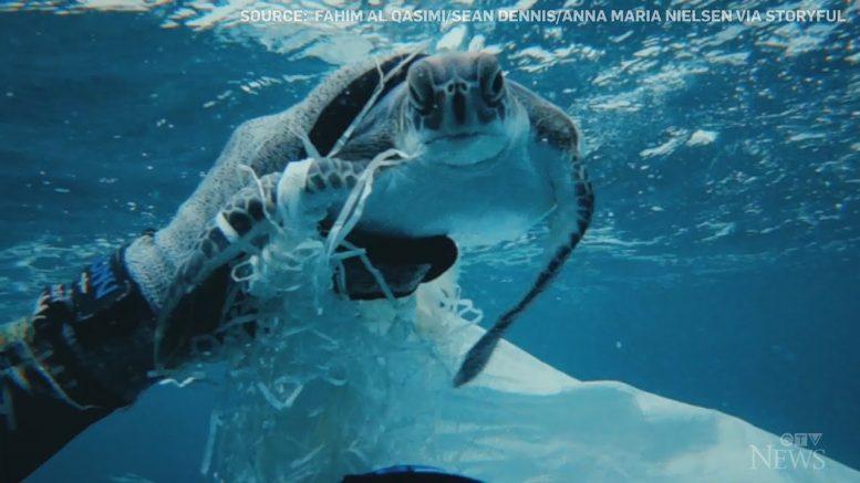 Caught on cam: Divers rescue sea turtle tangled in plastic 1