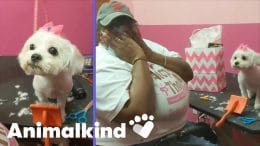 Dog groomer tricked into working on her new puppy   Animalkind 8