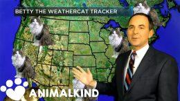 House cat photobombs weather forecast   Animalkind 3