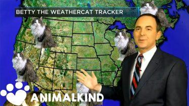 House cat photobombs weather forecast | Animalkind 6