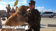 Golden retriever flips out when Marine comes home | Militarykind 4