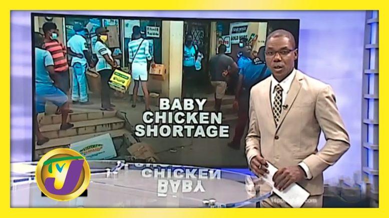 Shortage of Baby Chickens in St. Elizabeth - August 28 2020 1