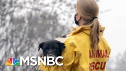 International Fund For Animal Welfare Conducting Rescue Mission To Save Animals From Wildfires 2