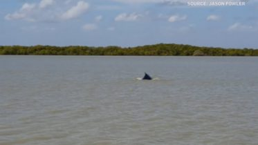 A whale lost in a murky river goes back to sea 6