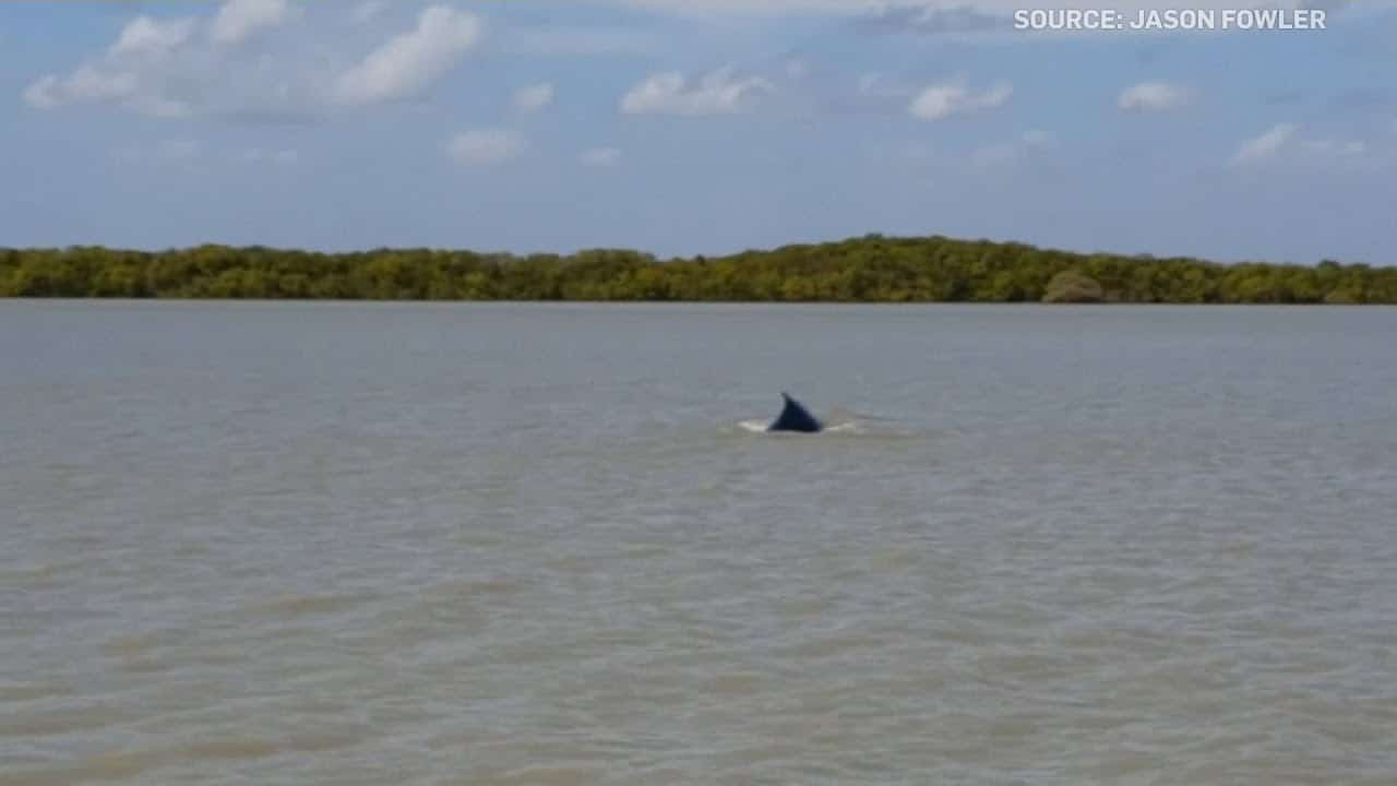 A whale lost in a murky river goes back to sea 5