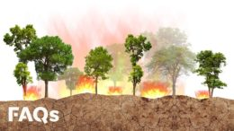 How controlled fires have helped prevent mega-fires for centuries | Just The FAQs 5