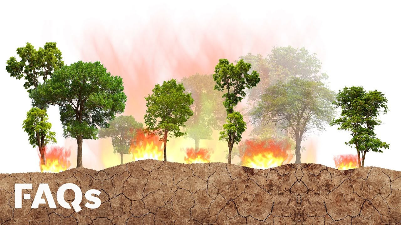 How controlled fires have helped prevent mega-fires for centuries | Just The FAQs 4