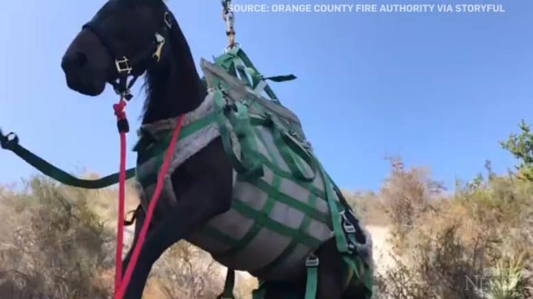 Horse rescued by helicopter after 18-metre fall into ravine 1