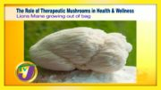 The Role of Therapeutic Mushrooms in Health & Wellness - September 22 2020 2