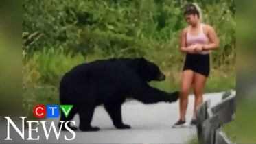 Caught on camera: Bear takes swipe at hiker in B.C. 6