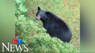 North Vancouver residents upset neighbourhood bear killed 6