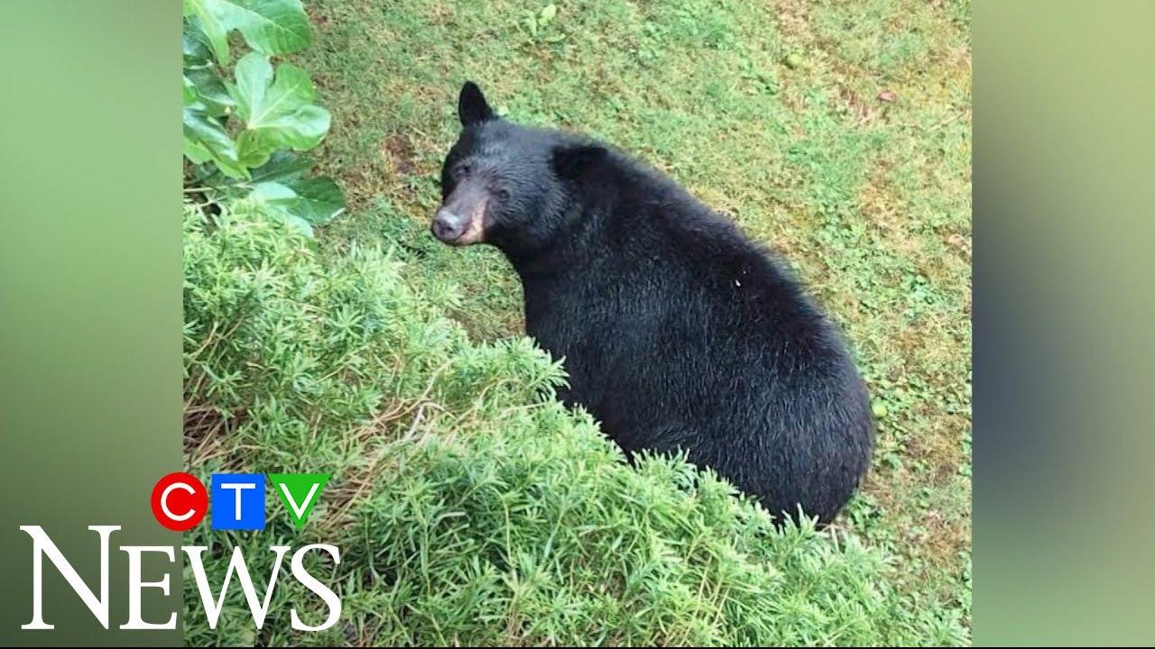 North Vancouver residents upset neighbourhood bear killed 1