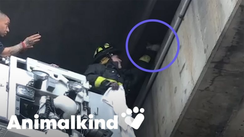 Kitten rescued by firefighters from busy overpass | Animalkind 1
