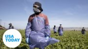 Farmworkers risk their health in order to pay the bills in Imperial County, California | USA TODAY 2