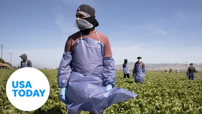 Farmworkers risk their health in order to pay the bills in Imperial County, California | USA TODAY 1