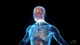 Newly discovered human organ may help reduce side effects of cancer treatment 5