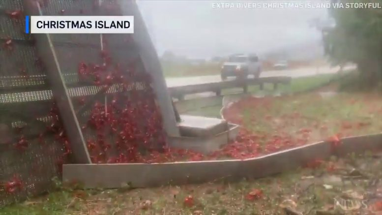Millions of crabs begin their long migration trek to breed on Australia's Christmas Island. 1