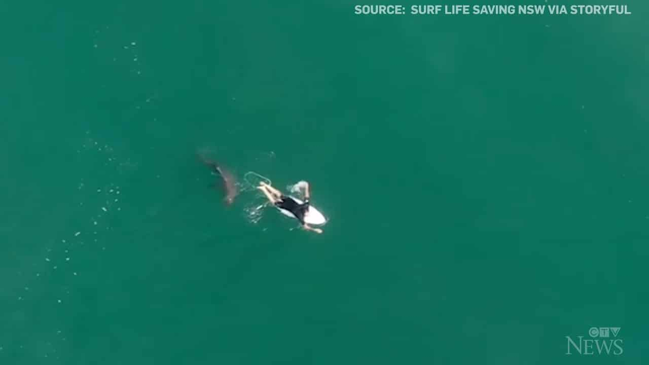 Pro surfer has close encounter with shark 4