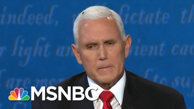 Buzzer Beater: Americans Delight In Fly's Cameo On VP Pence's Head | MSNBC 1
