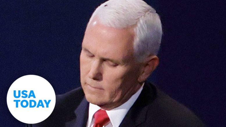 A fly stole the show resting on VP Mike Pence's head at the debate | USA TODAY 1