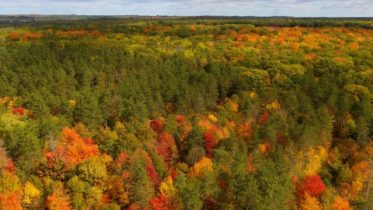 Beautiful scenes of fall foliage in Ontario 6