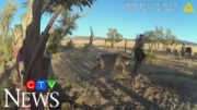 Caught on cam: Entangled deer charges at wildlife officer 2