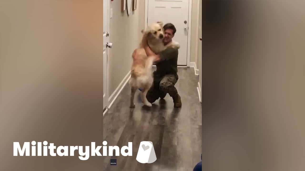 Giddy Golden Retriever leaps into dad's arms | Militarykind 1
