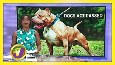 Dogs Act Passed - November 17 2020 6