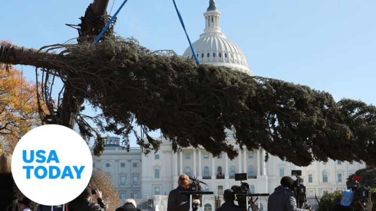 The Capitol Christmas Tree arrives in Washington, D.C. 1